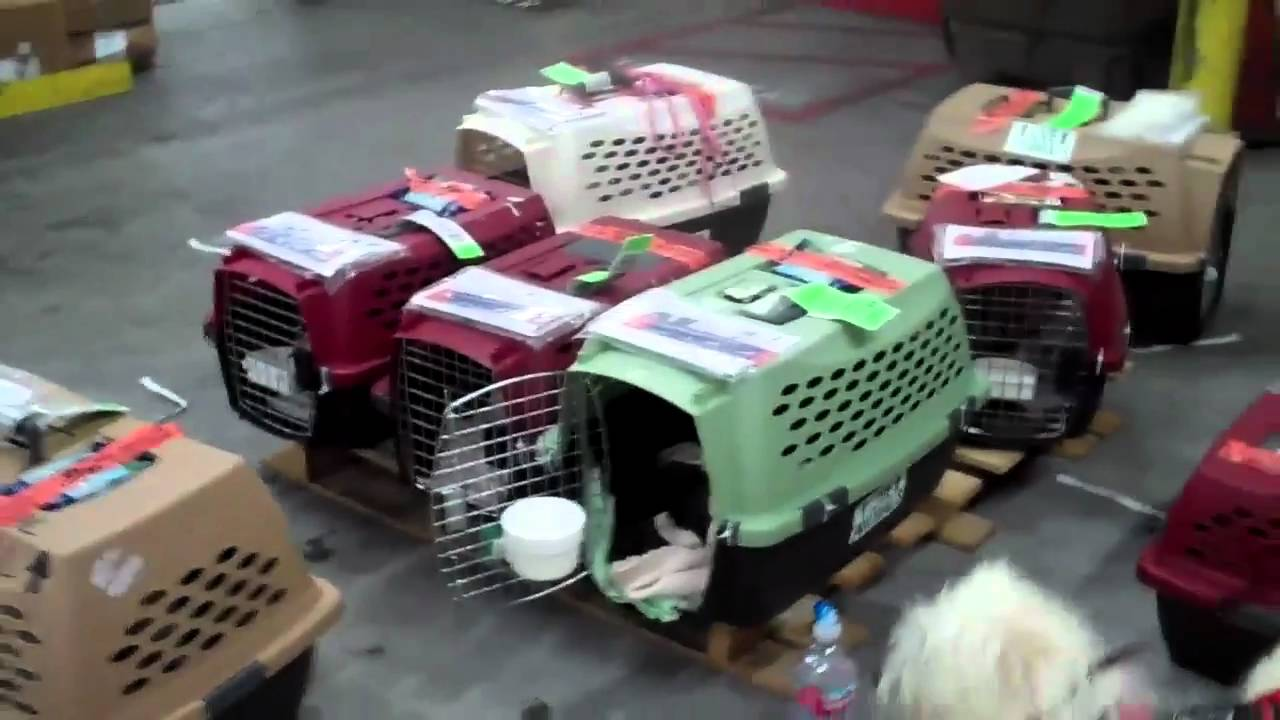 Devore Dogs Fly W Help From Truckdrivers In Cargo Mike Is Al Youtube