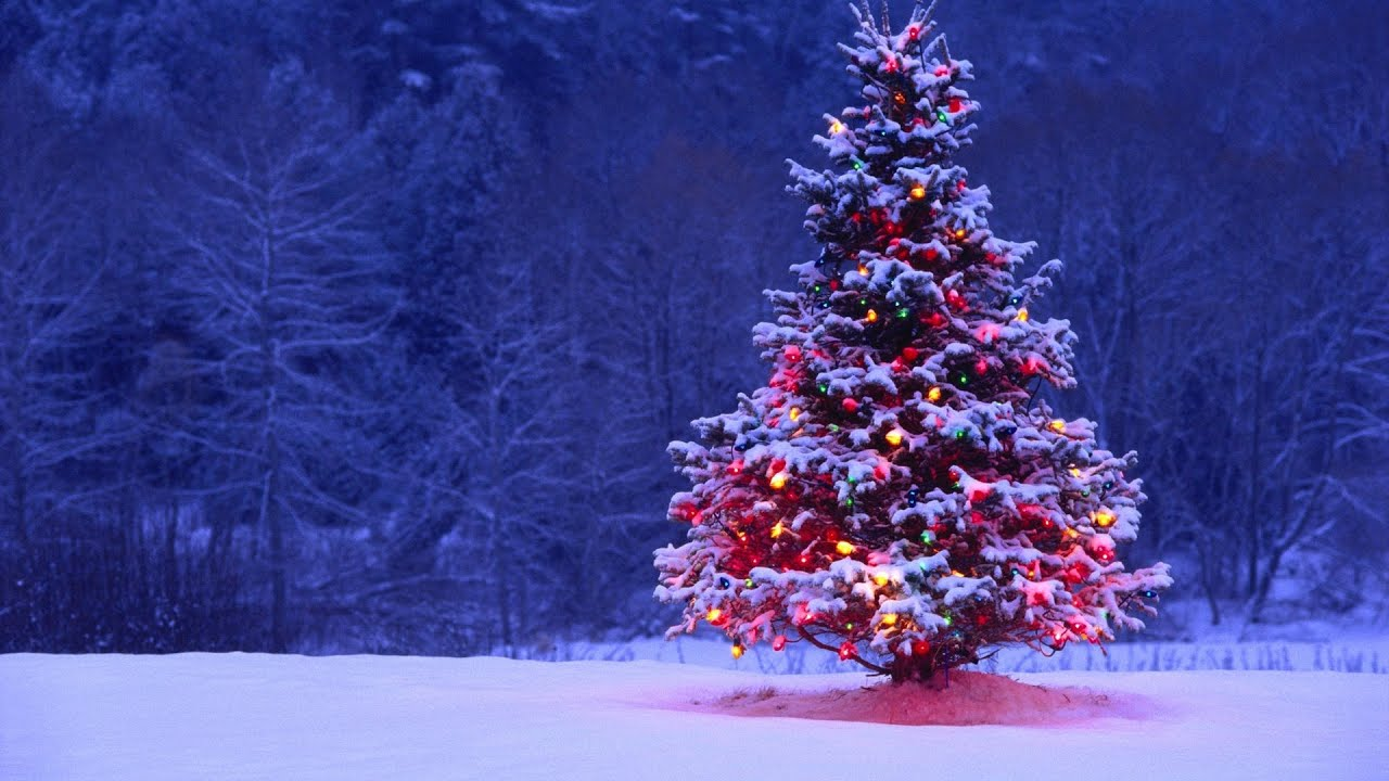 USA. Asheville. Lighting Christmas Tree in Biltmore Village. North ...