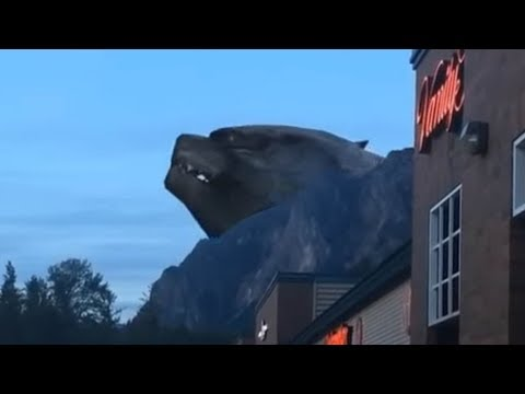 Real Godzilla caught on tape Original