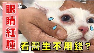 【豆漿 - SoybeanMilk】豆漿眼睛紅腫 有沒有怎樣呢?