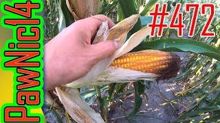Głownia guzowata i stonka w kukurydzy - Życie zwyczajnego rolnika #472