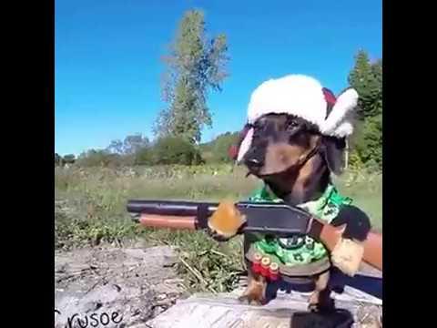Köpeğin Eline Tüfek Verilirse