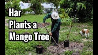 Plantando arboles de Mango | Fam Har