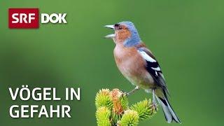 Das Schweigen Der Vögel   Wie Pestizide Heimische Vogelarten Bedrohen   Doku   SRF DOK
