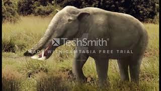 Evolución del elefante