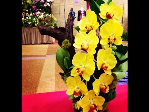 Орхидеи — виды орхидей, уход за орхидеями