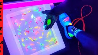 GLOW FISH Pond EXPERIMENT!