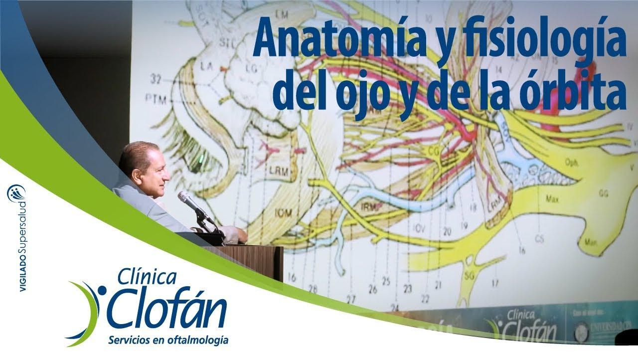 Anatomía y fisiología del ojo y de la órbita - Dr. Fabio Ramírez ...