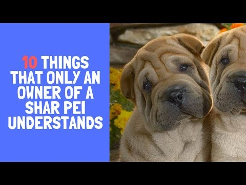 10 Things That Only An Owner Of a Shar Pei Understands