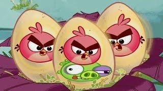 Злые птички - Энгри Бердс - Поющие яйца (S1E5) || Angry birds Toons