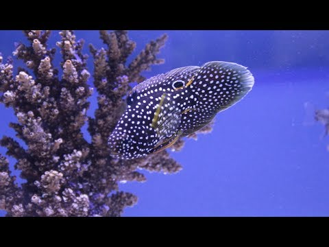 Old Orchard Aquariums - Chicago [Local Fish Store Travel Ep. 9]