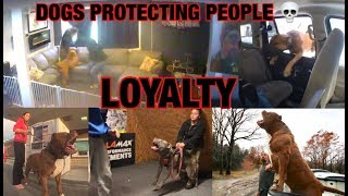 Loyal dogs protecting owners! Dogs are better then GUNS!