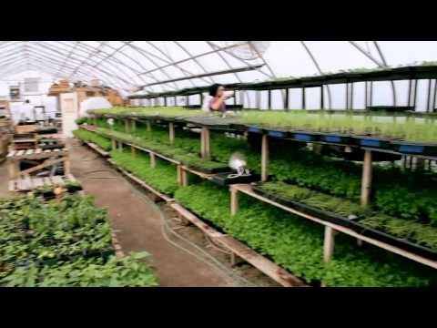 Organic Agriculture in the City of Toronto   Fresh City Farms
