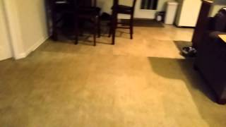 """Malinois """"bailey"""" Personality Test Home Environment Dog For Sale"""