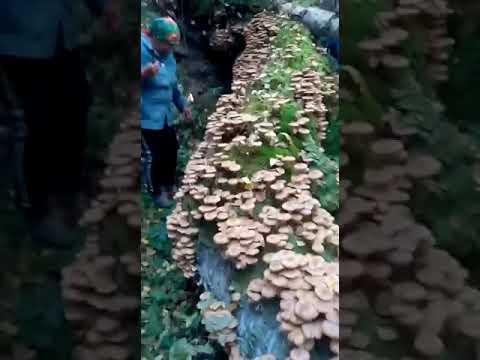 Грибы в Башкирии