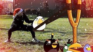 Real Life Angry Birds Seasons ❅ Christmas ❅