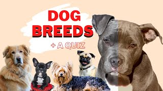 Breeds of dogs + a dog breeds quiz.  Learn about dogs.