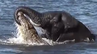 Big animal fights - natures heavyweights face off!