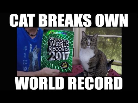 CAT BREAKS OWN WORLD RECORD