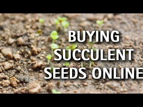 Succulents Buying Seeds Online Youtube
