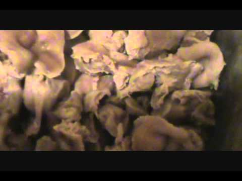 How to Properly Clean & Cook Chicken Gizzards Part 1