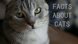 Cutest facts about cats | Fact Friday
