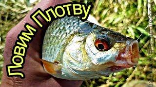Рыбалка на СПИННИНГ закончилась ужением ПЛОТВЫ))  поплавок!!!