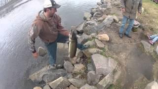walleye fishing huge musky caught