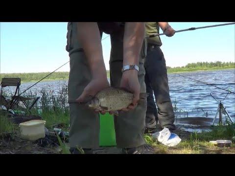 Фидерная ловля на реке Цна