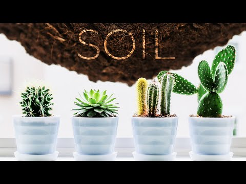 THE BEST SOIL MIX FOR CACTI & SUCCULENTS!