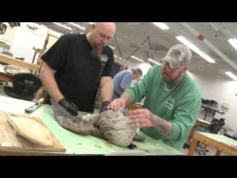 Learn Taxidermy at the Surry Community College Pilot Center, Pilot Mountain, N.C.