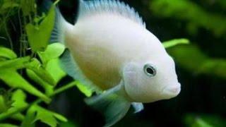 Мой аквариум -
