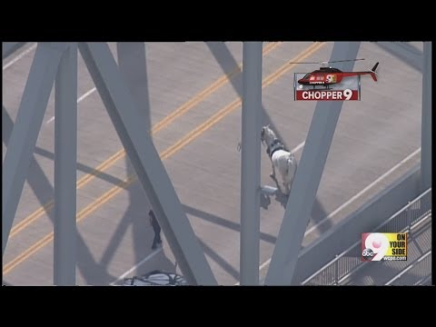 Woman left dangling from bridge after accident involving horse-drawn carriage