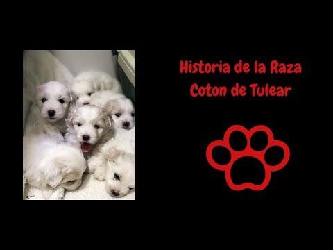 historia de la raza canina Coton de Tulear