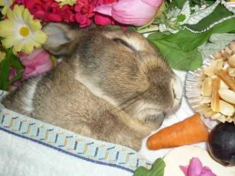My bunny died (very sad) うさぎのお葬式
