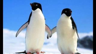 avicii penguin original mix