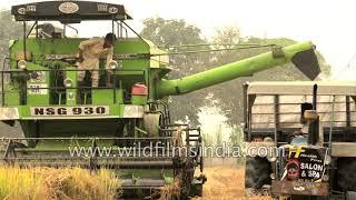 Massive harvesting machines of Punjab: Combine harvester at work