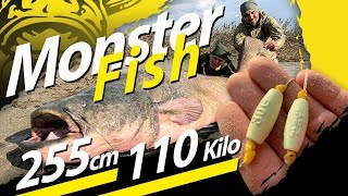Welsangeln An Der Wasseroberfläche | Monster Wels 255cm - 110 Kilo | Giant Catfish 242,5 Pounds