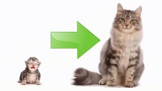 Весь рост кота за 10 сек. | Как растет котенок по месяцам | Таймлапс кота