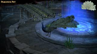 Path of Exile - Peacock Pet