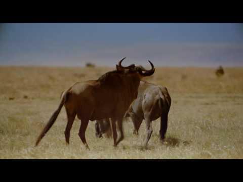 IMAX Africa The Serengeti 1994