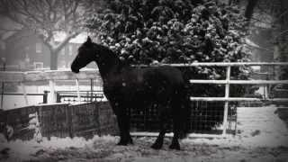 Eefke, my Friesian Horse : Black in White part two