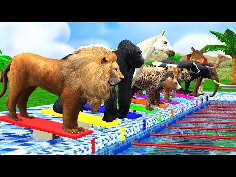Counting Numbers Zoo Animals Swimming Race Fun Play Video   Cartoon Animals For Children Kids