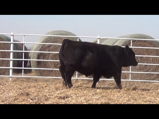Express Ranches Lot 321