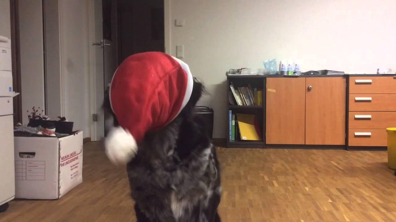 Standard Weihnachtsgrüße.Balou S Weihnachtsgrüße