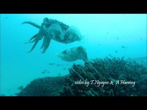 Scuba Diving Mabul, Semporna
