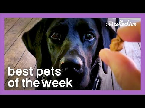 a-very-special-treat-|-best-pets-of-the-week