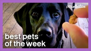 A Very Special Treat | Best Pets of the Week