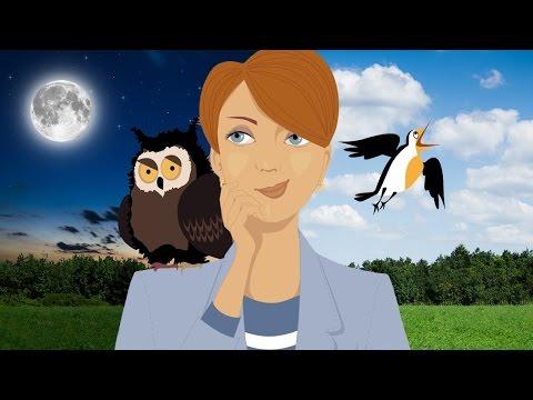 Early Birds vs Night Owls - Explained