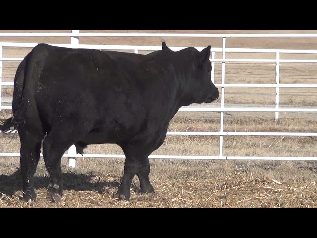 Express Ranches Lot 163
